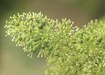floraison-360x260